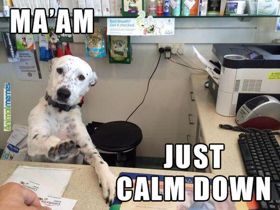 dog-maam